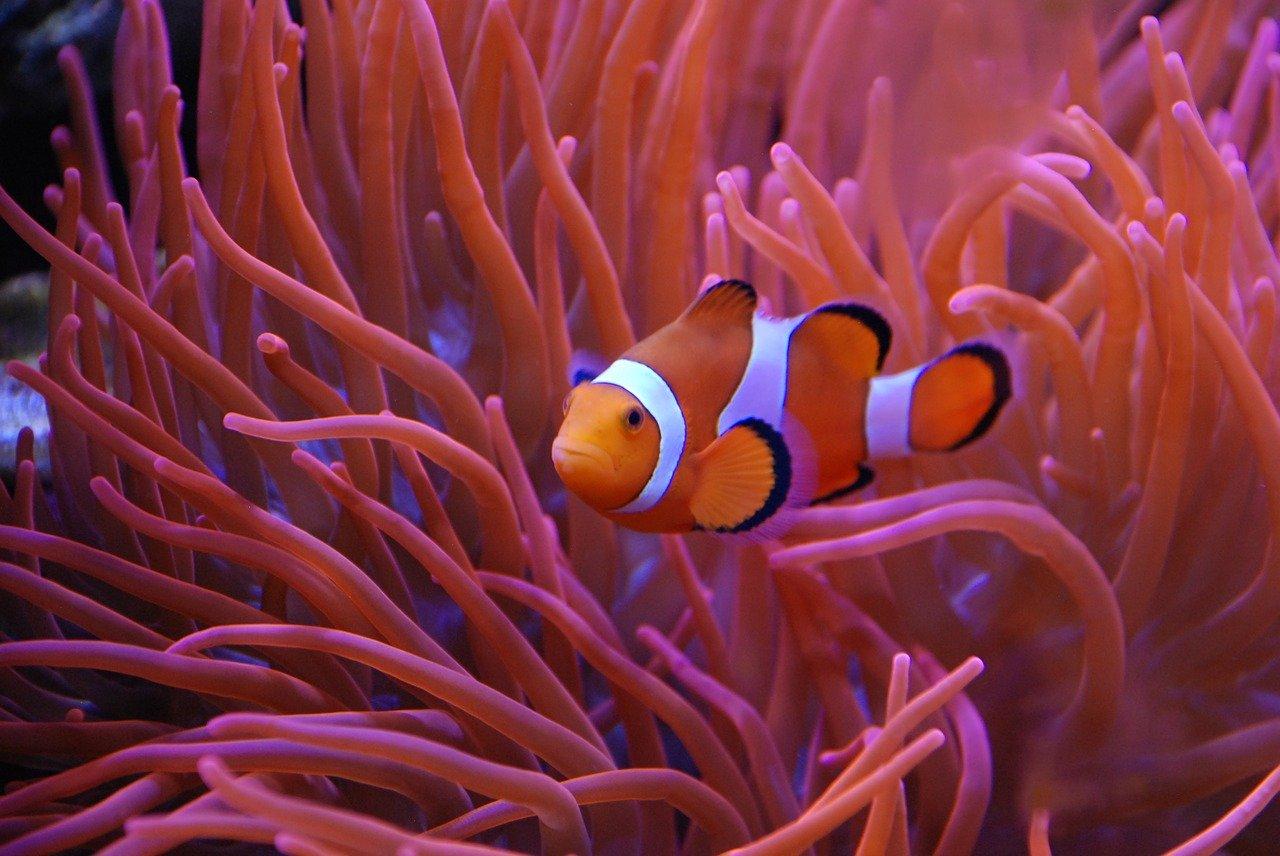 coral-3734602_1280.jpg