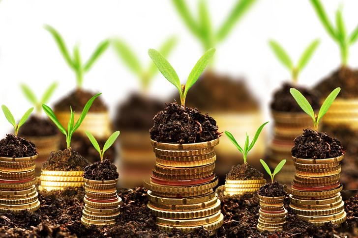 Cikkajánló a hétvégére: a zöld befektetéseken át az egészségügyi szektor környezetszennyezéséig