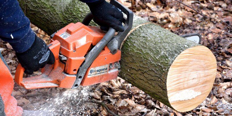 Az állami erdészetek fakitermelése jelentősen gyorsítja a klímaváltozást