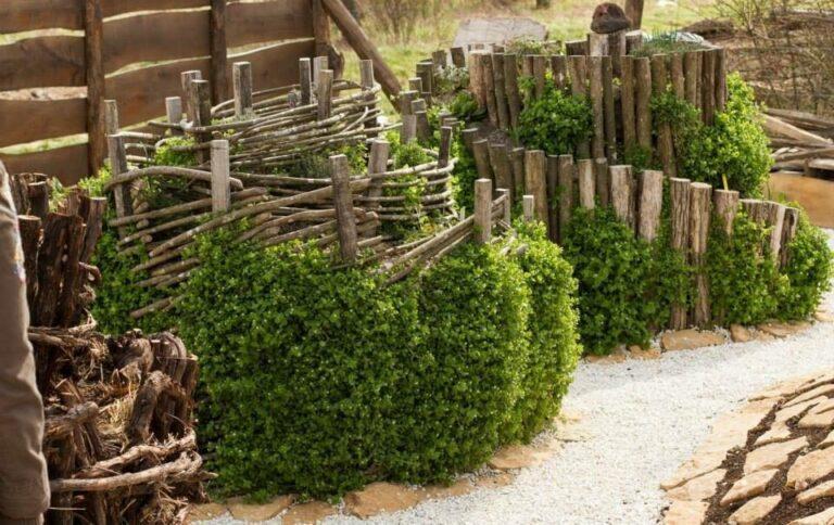 Egy kincs, amit látnod kell! Gyógynövény-völgy Zánkán