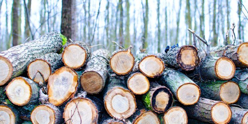 Így lehet a fakitermelés a korrupció melegágya